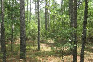 Fairview Crossroads Homesite and Timber Tract in Lexington, SC (4 of 16)
