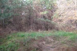 Liberty Hill Hunting and Timber Investment in McCormick, SC (13 of 17)