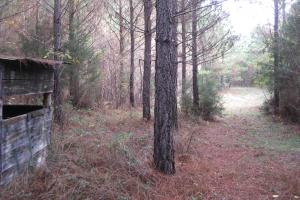 Liberty Hill Hunting and Timber Investment in McCormick, SC (11 of 17)