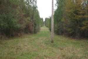 Liberty Hill Hunting and Timber Investment in McCormick, SC (16 of 17)