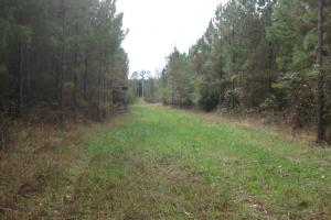 Liberty Hill Hunting and Timber Investment in McCormick, SC (14 of 17)