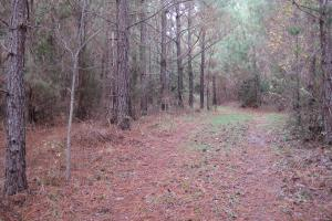 Liberty Hill Hunting and Timber Investment in McCormick, SC (17 of 17)