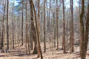 The Longleaf Ridge Tract in Shelby, AL (14 of 20)