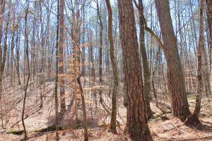 The Longleaf Ridge Tract in Shelby, AL (13 of 20)