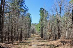 The Longleaf Ridge Tract in Shelby, AL (17 of 20)