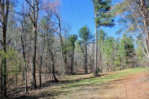 The Longleaf Ridge Tract in Shelby, AL (2 of 20)