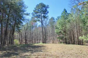 The Longleaf Ridge Tract in Shelby, AL (3 of 20)