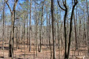 The Longleaf Ridge Tract in Shelby, AL (9 of 20)