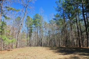 The Longleaf Ridge Tract in Shelby, AL (4 of 20)