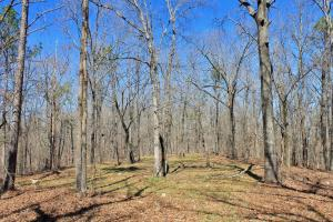 The Longleaf Ridge Tract in Shelby, AL (7 of 20)