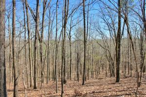 The Longleaf Ridge Tract in Shelby, AL (8 of 20)