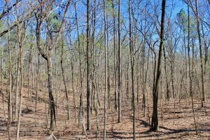 The Longleaf Ridge Tract in Shelby, AL (16 of 20)