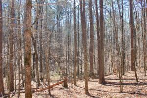 The Longleaf Ridge Tract in Shelby, AL (15 of 20)