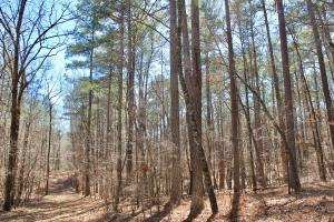 The Longleaf Ridge Tract in Shelby, AL (10 of 20)
