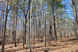 The Longleaf Ridge Tract in Shelby, AL (11 of 20)