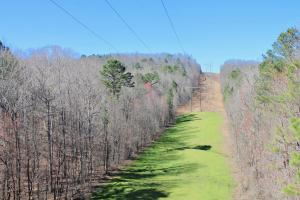 The Longleaf Ridge Tract in Shelby, AL (5 of 20)