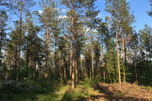 Westminster Hunting and Timber Property - Oconee County SC