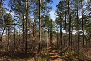 Westminster Hunting and Timber Property in Oconee, SC (14 of 18)