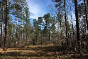 Westminster Hunting and Timber Property in Oconee, SC (4 of 18)