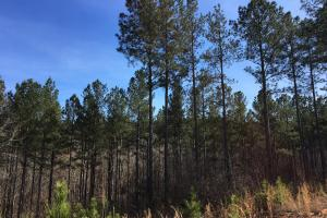 Westminster Hunting and Timber Property in Oconee, SC (7 of 18)