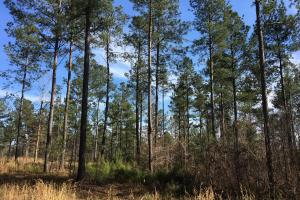 Westminster Hunting and Timber Property in Oconee, SC (12 of 18)