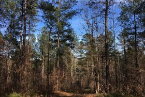 Westminster Hunting and Timber Property in Oconee, SC (10 of 18)
