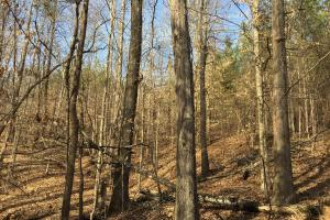 Westminster Hunting and Timber Property in Oconee, SC (18 of 18)