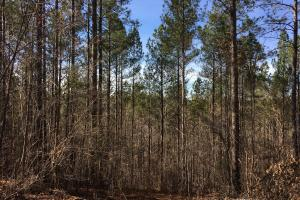 Westminster Hunting and Timber Property in Oconee, SC (13 of 18)