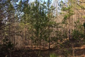 Westminster Hunting and Timber Property in Oconee, SC (17 of 18)