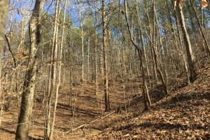 Westminster Hunting and Timber Property in Oconee, SC (3 of 18)
