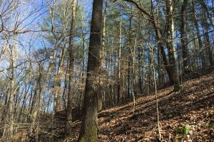 Westminster Hunting and Timber Property in Oconee, SC (8 of 18)