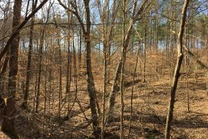 Westminster Hunting and Timber Property in Oconee, SC (9 of 18)