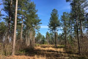 Westminster Hunting and Timber Property in Oconee, SC (5 of 18)