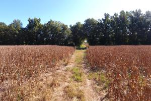 30 Acre Farm and Recreational Retreat in Berkeley, SC (3 of 11)