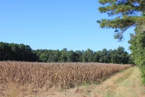30 Acre Farm and Recreational Retreat in Berkeley, SC (8 of 11)