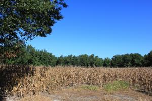 30 Acre Farm and Recreational Retreat in Berkeley, SC (10 of 11)