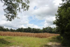 30 Acre Farm and Recreational Retreat in Berkeley, SC (2 of 11)