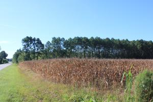 30 Acre Farm and Recreational Retreat - Berkeley County SC