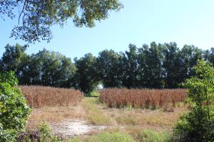 30 Acre Farm and Recreational Retreat in Berkeley, SC (9 of 11)