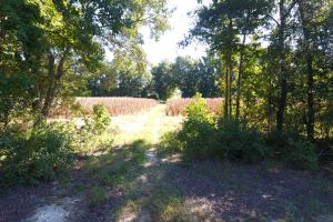 30 Acre Farm and Recreational Retreat in Berkeley, SC (11 of 11)