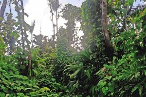 Dominica Rainforest Property in Saint Paul, Dominica (2 of 4)