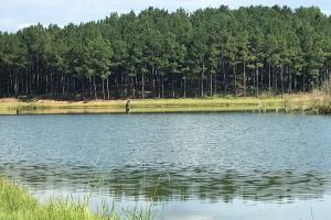 Sneads Creek Recreational Tract - Pickens County AL