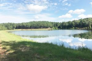 Sneads Creek Recreational Tract in Pickens, AL (24 of 62)