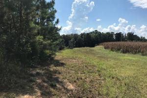 Sneads Creek Recreational Tract in Pickens, AL (36 of 62)