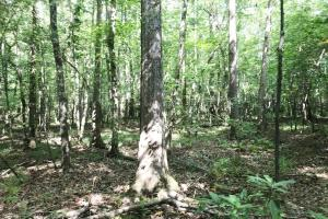 Sneads Creek Recreational Tract in Pickens, AL (3 of 62)