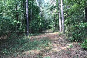 Sneads Creek Recreational Tract in Pickens, AL (51 of 62)