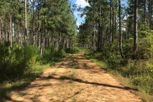 Sneads Creek Recreational Tract in Pickens, AL (32 of 62)