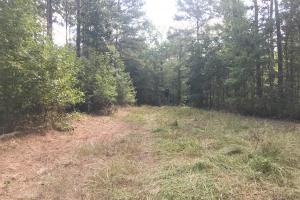 Sneads Creek Recreational Tract in Pickens, AL (35 of 62)