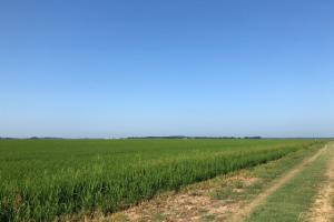 228+/- Acres Rice Farm & Duck Hunting - Jackson County AR