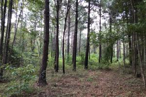 Hunting and Timber Tract near Bassfield - Jefferson Davis County MS